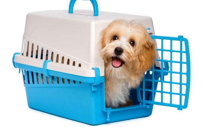 Saiba quais são os cuidados para usar o transporte público com o seu pet