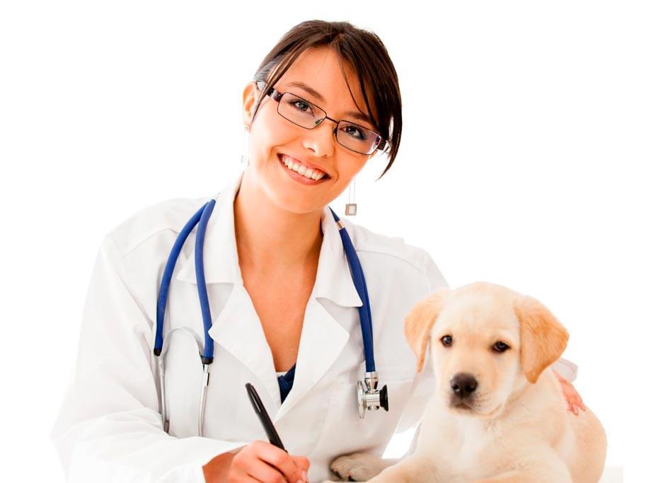 O que precisamos saber antes de levar o Pet ao veterinário