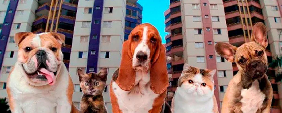 Pets em Predios