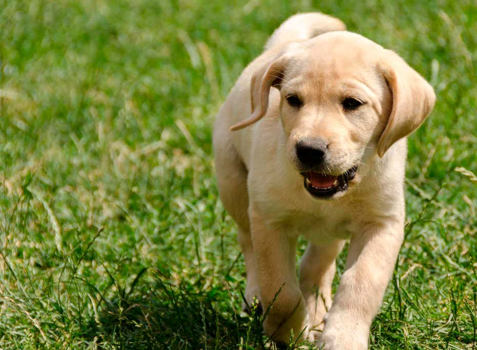Pets também têm direitos perante a justiça