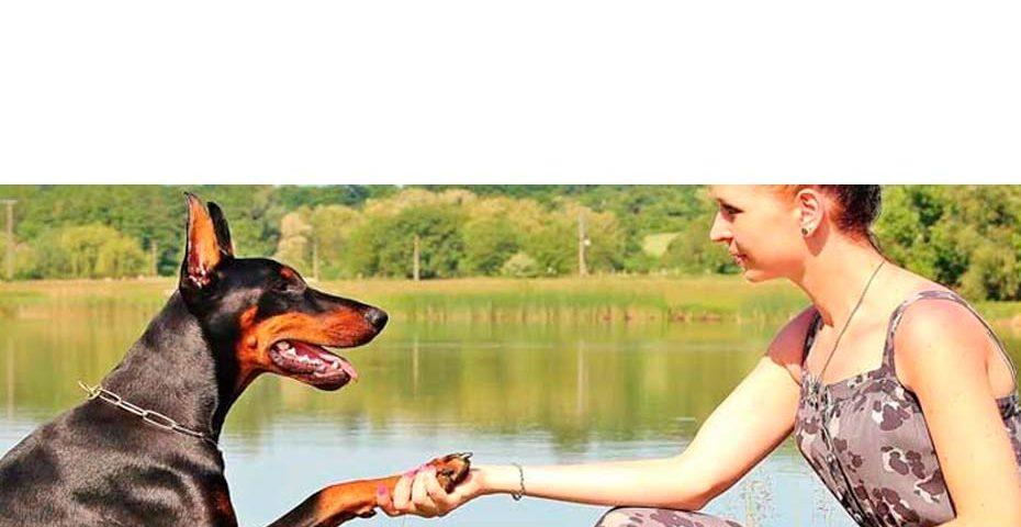 Advogada especializada em Direito Pet comenta aprovação de Projeto de Lei que inclui direitos dos animais na legislação nacional