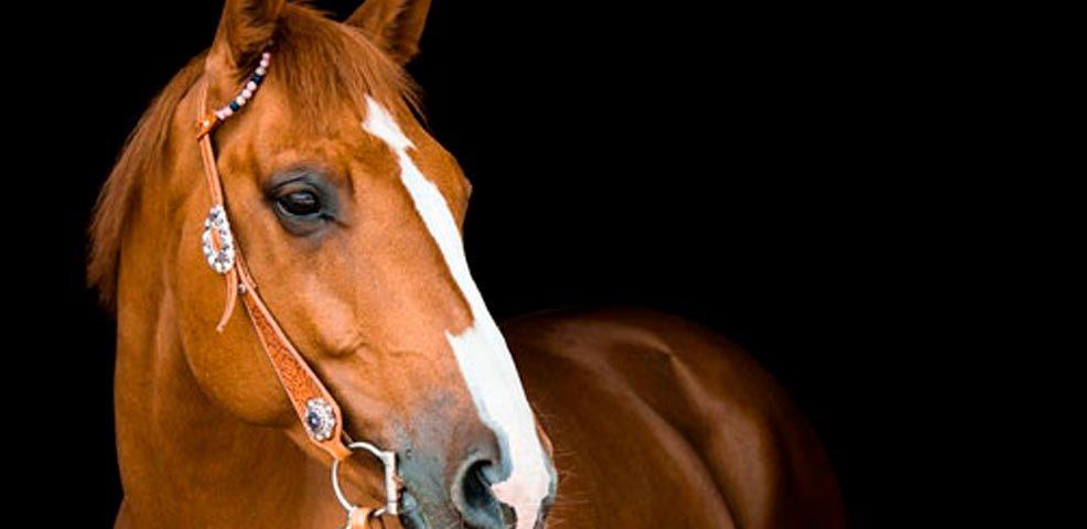Indenização para dono de égua da raça crioula que morreu eletrocutada por fio de luz