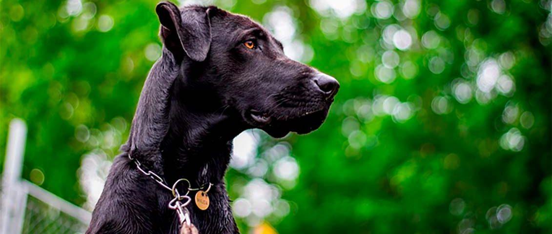 Justiça impede mulher que doou cachorro de pegá-lo de volta
