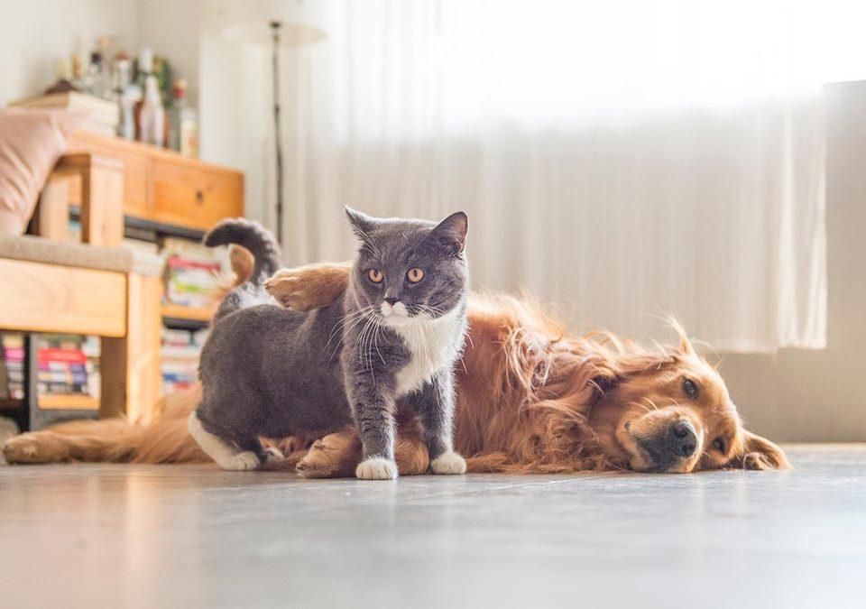 Entidades internacionais alertam: cães e gatos não transmitem a covid-19 e abandono é crime