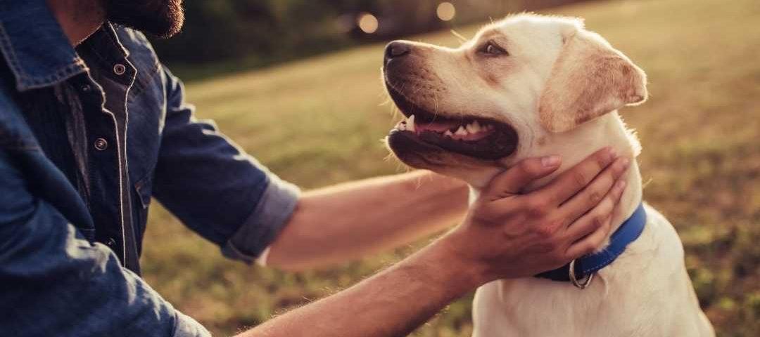 Site de hospedagem de animais não tem obrigação de manter cadastro de anfitrião.