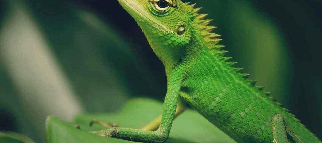 Confira o que você precisa saber antes de ter um animal exótico em casa
