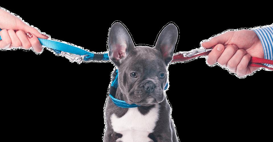 Conciliação e Mediação de Pets