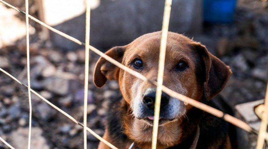 Meio Ambiente aprova sistema de proteção animal