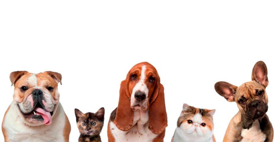 Animais de estimação em condomínios