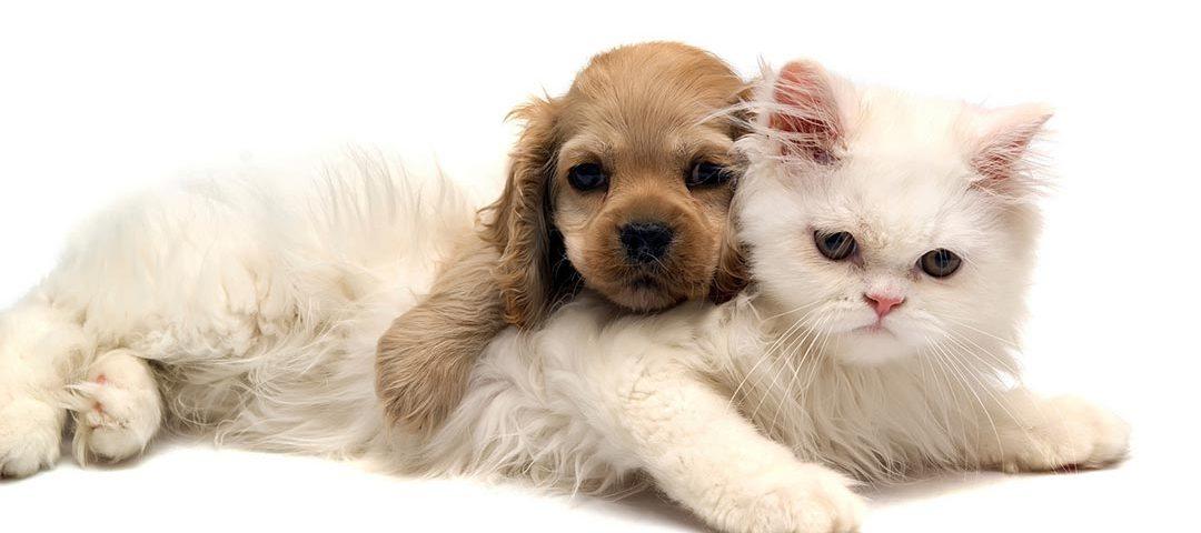 Brasil poderá ter marco regulatório dos animais de estimação